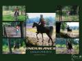 raamwerk-endurance-2-png